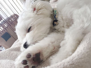 犬の写真・画像素材[474264]