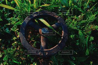 緑の写真・画像素材[463664]