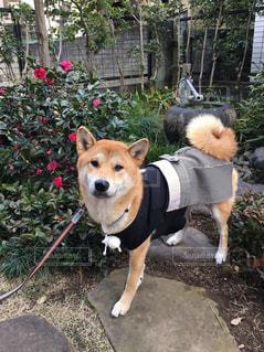 犬 - No.444460