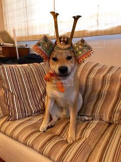 犬の写真・画像素材[463569]