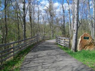 自然,風景,緑,田舎,新緑,USA,散歩道,ブラッドフォード,ペンシルバニア州