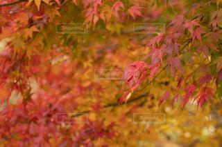 近くの木のアップの写真・画像素材[1638836]