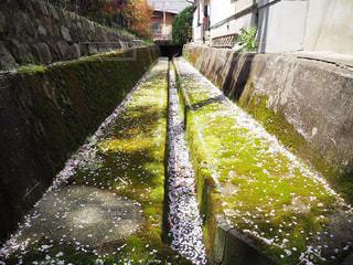 桜,緑,水路,苔,路地,狭い,さくら