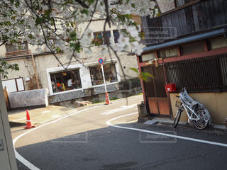 桜,京都,路地,祇園,さくら,曲がり角