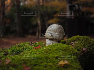 風景,紅葉,京都,水,もみじ,景色,観光,苔,日本,大原三千院,日本の風景,わらべ地蔵,オススメスポット,京都オススメスポット,わらべ