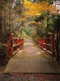 風景,紅葉,京都,景色,観光,日本,観光スポット,大原三千院,日本の風景,オススメスポット,京都オススメスポット