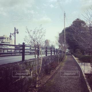 道路,川沿い,街路樹,長崎県,諫早市