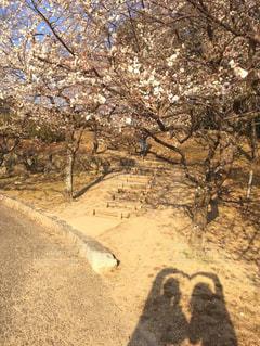 梅,散歩,影,ハート,お花見,さんぽ,お散歩,おでかけ,いい天気,私の街
