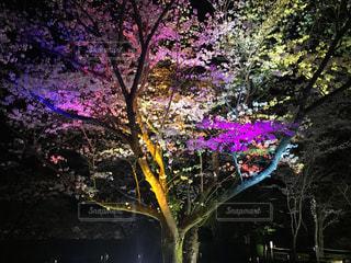 宮崎市の写真・画像素材[434188]