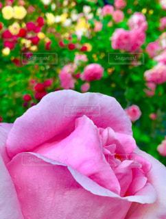 花の写真・画像素材[487892]