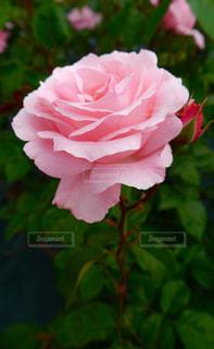 近くの花のアップの写真・画像素材[880743]