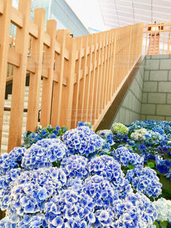 花,雨,紫陽花,梅雨