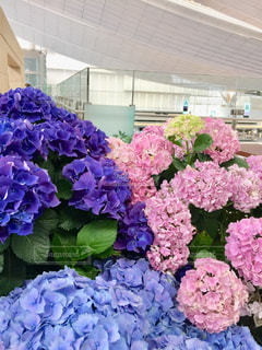 花,雨,紫陽花,梅雨,草木