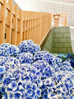 花,雨,紫陽花,梅雨,草木,城壁,木壁