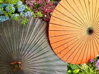 花,雨,傘,紫陽花,和傘,梅雨,草木,カサ