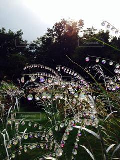 夕日,箱根,ガラスの森美術館,夕日が綺麗