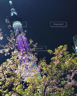 春,花見,東京スカイツリー,押上,墨田区,SKYTREE,桜と空