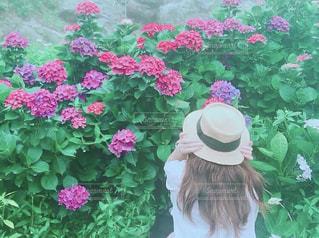 雨,屋外,綺麗,女の子,紫陽花,麦わら帽子,台湾,梅雨,草木,ガーリー,アジサイ,陽明山繡球花海