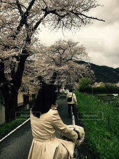 No.439162 桜