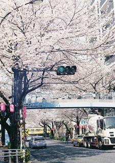 春,桜,電車,花見,満開,お花見,中野,4月
