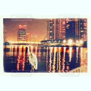 東京,テラス,日本,隅田川,渡り鳥,日本橋,巣立ち,月島,ワタリドリ,テラスハウス