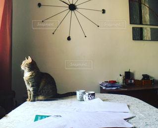 猫の写真・画像素材[458078]