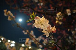 花模様の写真・画像素材[1122058]