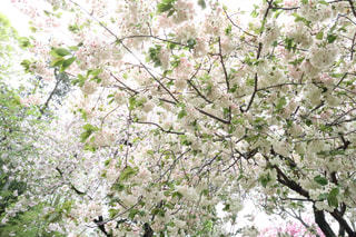 近くの木のアップの写真・画像素材[1122197]