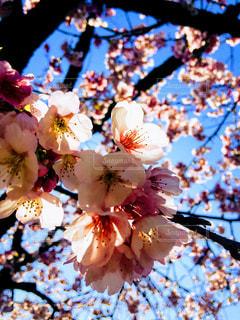 近くの花のアップの写真・画像素材[1122252]