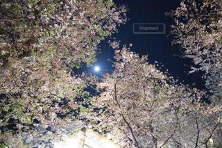 近くの木のアップの写真・画像素材[1122291]