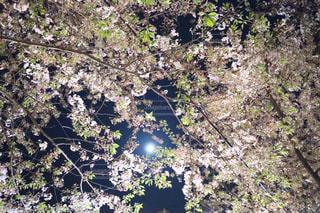 近くの木のアップの写真・画像素材[1122296]