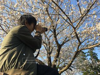 自然,公園,桜,宮崎,わたしの街