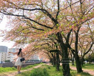 公園,春,桜,ピンク,緑,葉桜,大分市,平和市民公園