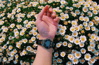 自然,花,夏,お花畑,腕時計,時計,可愛い