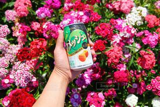 No.498717 お酒