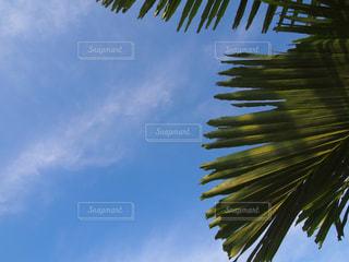 空の写真・画像素材[454281]