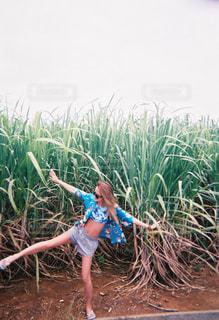 沖縄の写真・画像素材[457101]