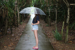 沖縄の写真・画像素材[537542]
