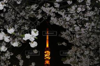 東京タワー - No.565847