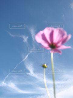 近くの花のアップ - No.843432
