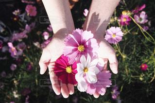 紫色の花一杯の花瓶の写真・画像素材[891005]