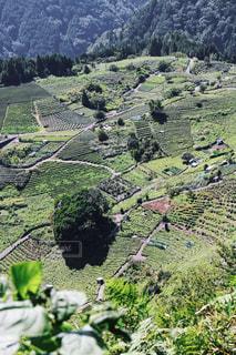 天空の茶畑の写真・画像素材[1047836]