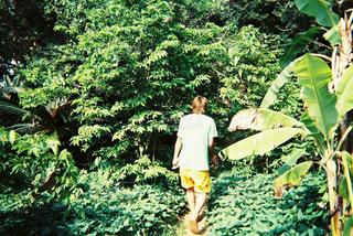 緑豊かな緑の森に立っている人の写真・画像素材[1159413]