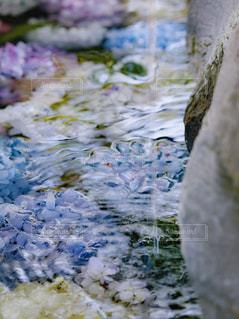 近くに水の中を白鳥のアップの写真・画像素材[1232302]