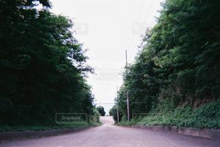 道の端に木のパスの写真・画像素材[1233183]