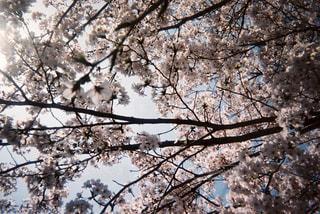 フォレスト内のツリーの写真・画像素材[1233184]