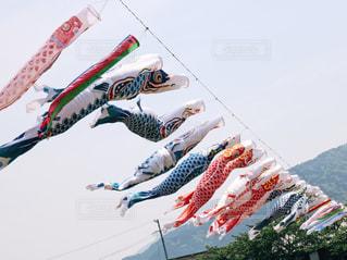 宙を舞う凧の写真・画像素材[1249450]