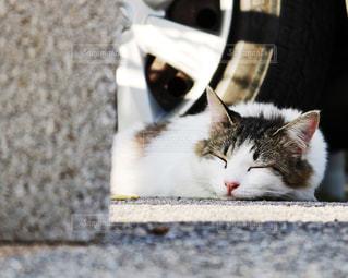 白い面の上に横たわる猫の写真・画像素材[1255714]