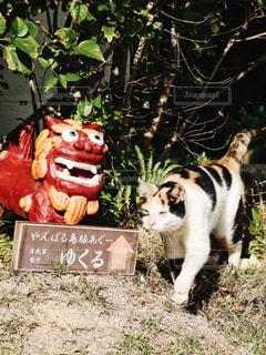 草の上に座って猫対象フィールドの写真・画像素材[1255715]
