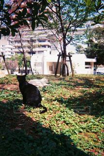 庭の猫の写真・画像素材[1258069]